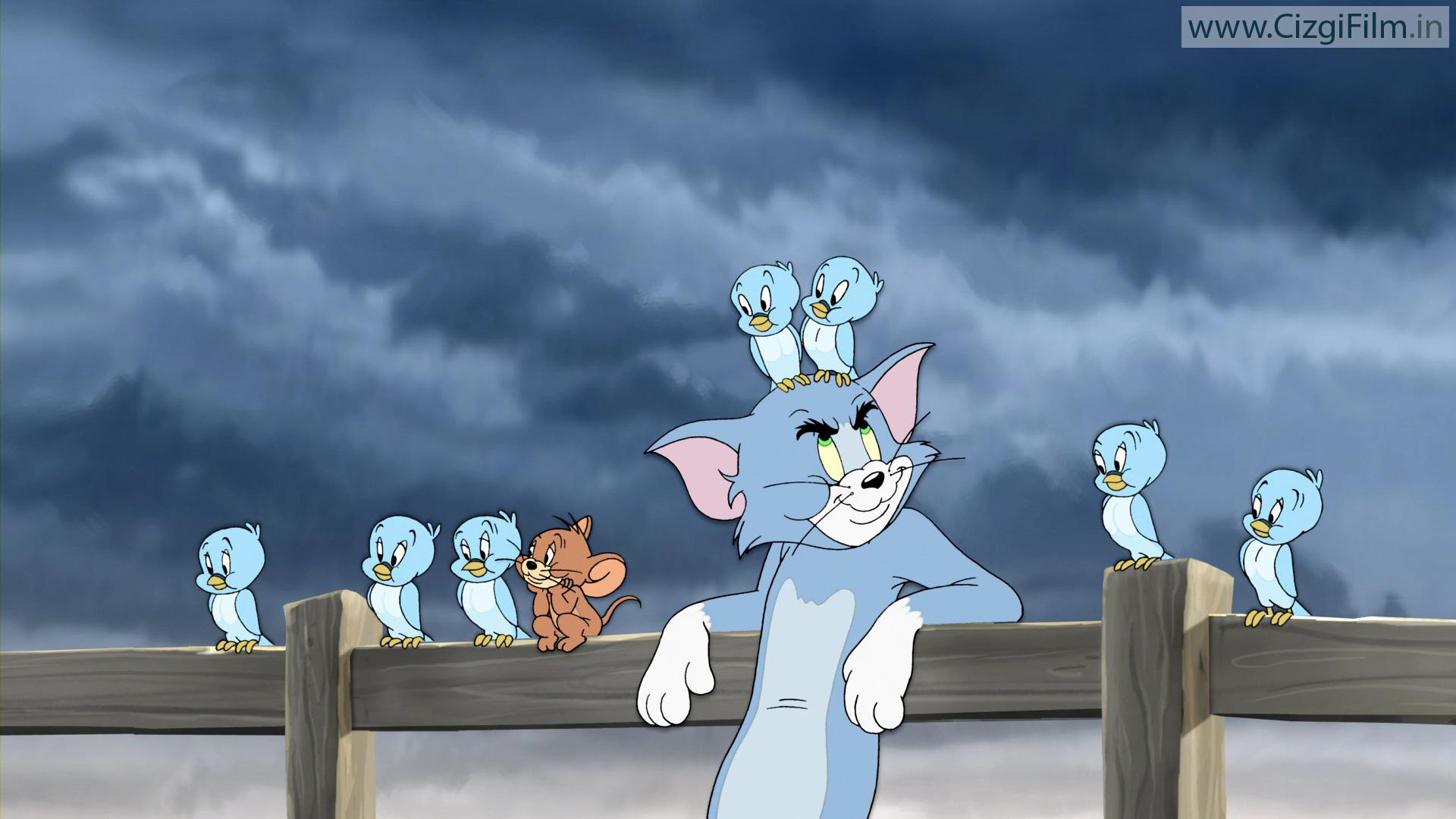 Tom ve Jerry » Tom ile Kuşlar - Tam boy görmek için tıklayın